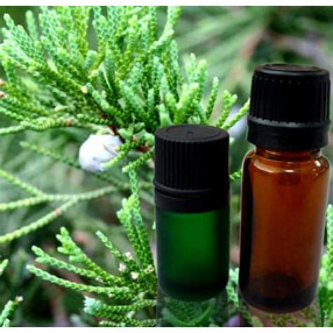 Cypress Essential Oil at Wholesale Price, Cypress Oil Bulk