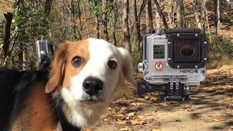 GoPro Hero 4: Being a Dog in 4K! - YouTube