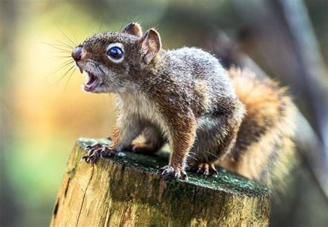 City warns 'aggressive' squirrel that's gnawed on five
