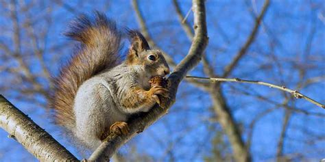 What Do Squirrels Sound Like And Why They Do It
