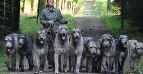 THE WORLDS LARGEST DOGS - Viral Fancy